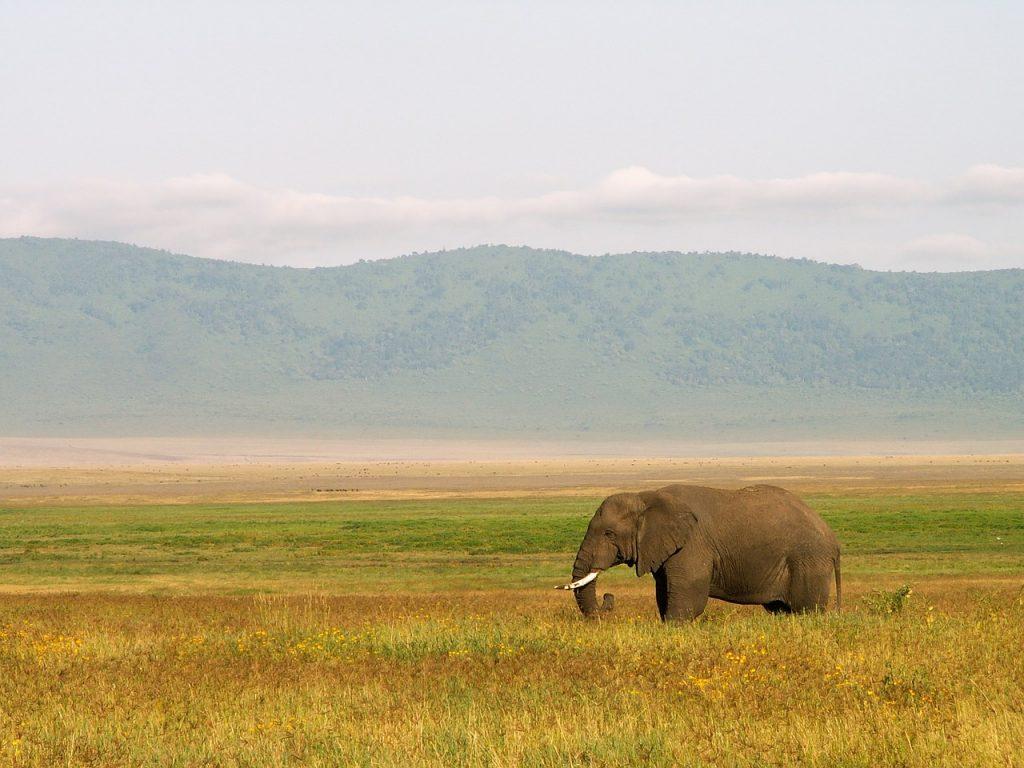サバンナと象