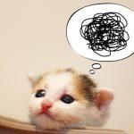 困惑する子猫